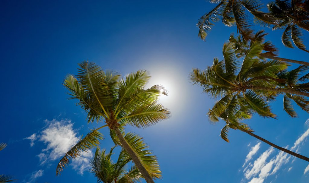 Palm trees against a bright blue sky.