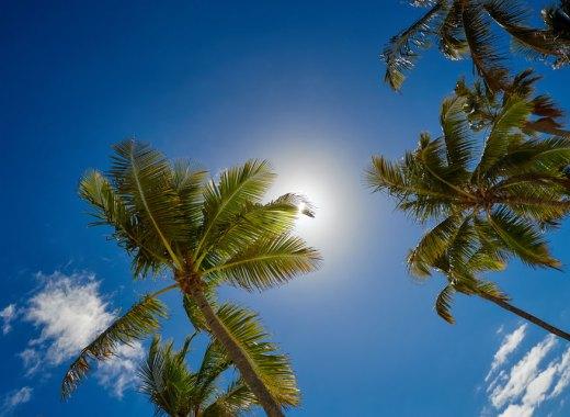 Palm trees against a blue sky.