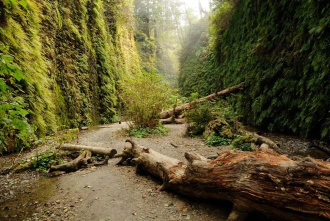 beautiful-fern-canyon