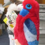 Plush rosella and a kookaburra perched on an office cubicle.