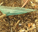 Raking leaves into a small pile.