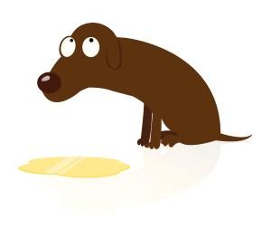 Ashamed dog with puddle of pee