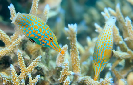 two colourful fish swimming near coral.