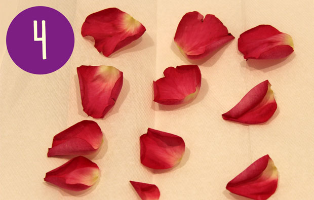 individual flower petals on paper towel
