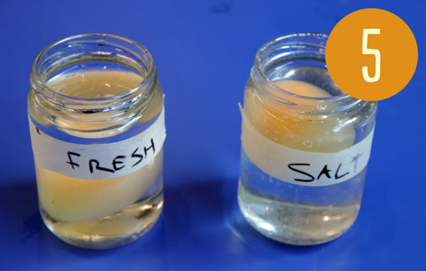 Two jars labelled fresh and salty each containing liquid and and egg.