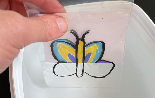 Drawing of a butterfly half emerged in water, the top half is coloured.