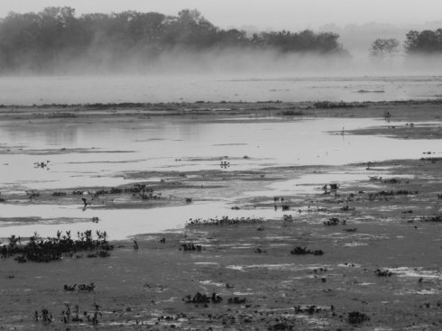 Fog On The Bayou