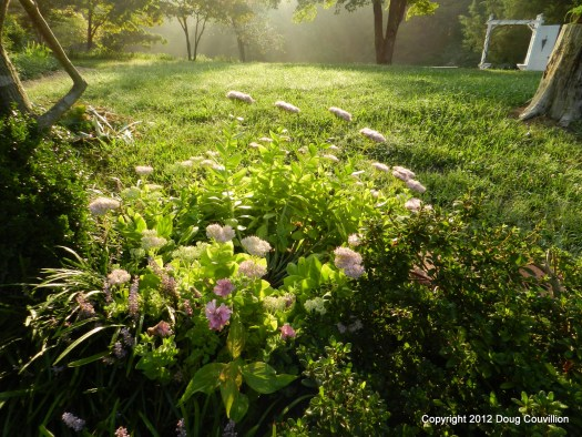 photograph of garden flowers in the early morning light