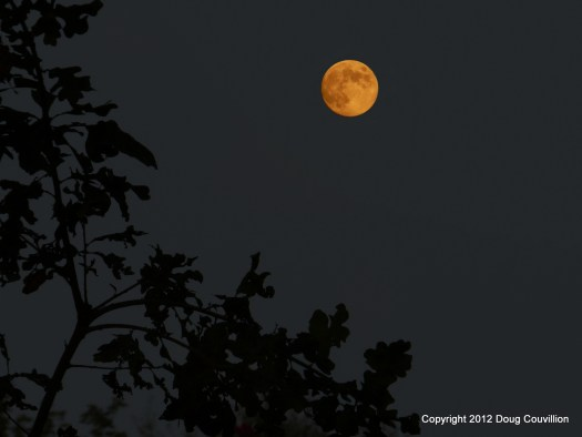 photograph of nearly full moon with trees in the foreground