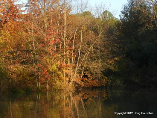photograph of trees reflected in the water at Deep Run Park