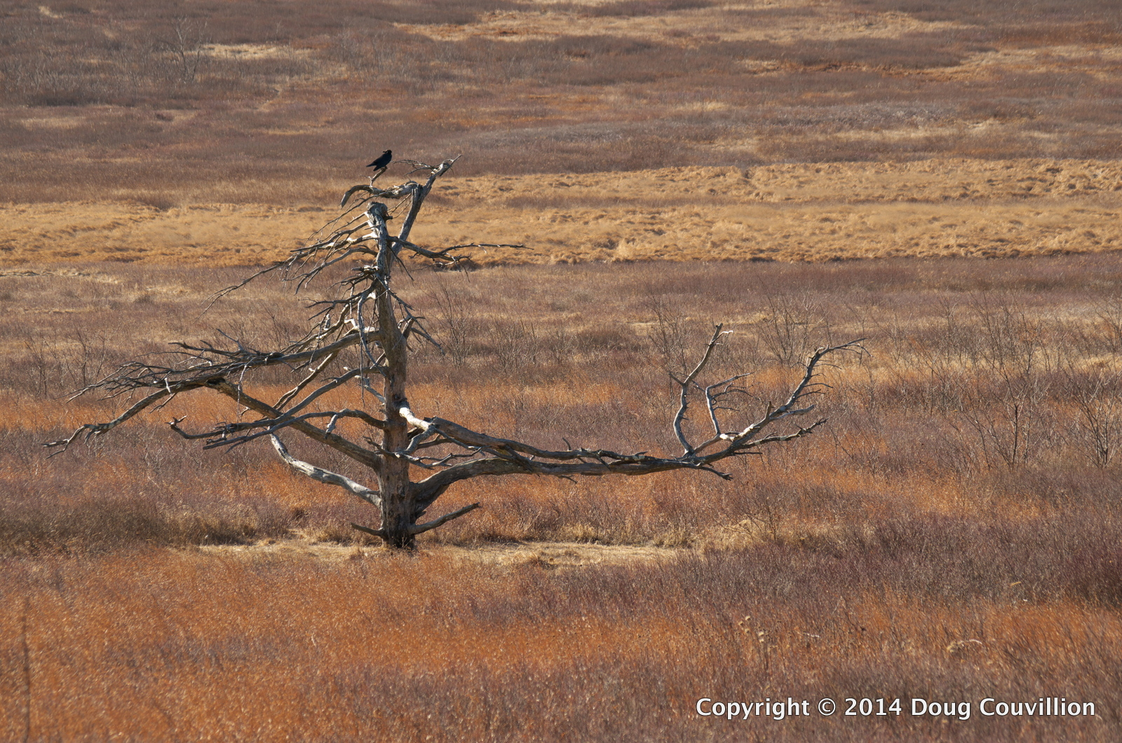 photograph of a bare tree in a meadow with a crow sitting on top of it