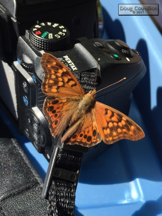 photograph of an orange butterfly on a camera by Doug Couvillion