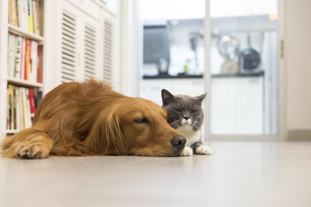 Alergia a cães e gatos: por que acontece e como evitar?