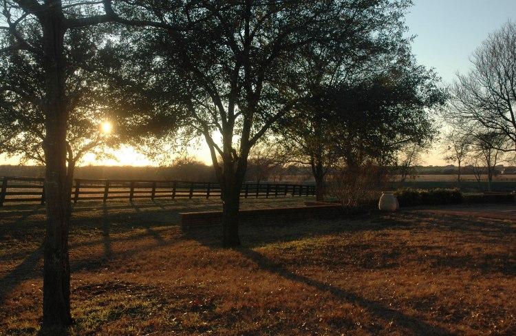 Sunset-thru-trees_2X
