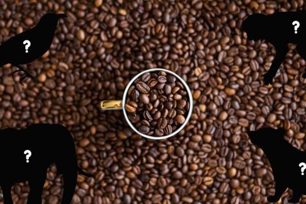 kopi yang ekstrim ala duniamasak via pexels