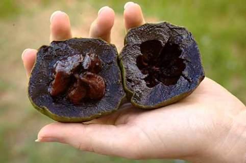 Manfaat buah black sapote via nscf.org.au ala tim duniamasak.com