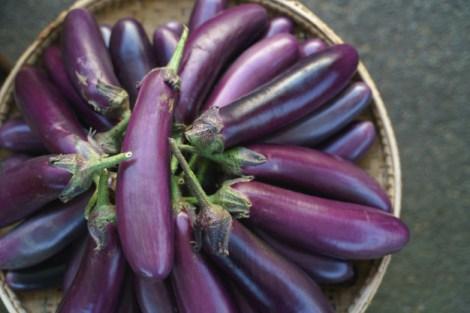 Manfaat terong ungu via freepik ala duniamasak