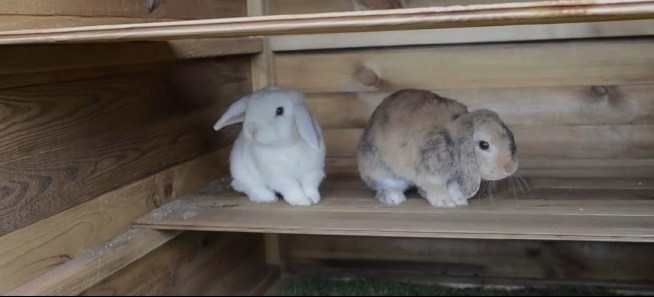 Rabbit Welfare Dunster House