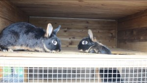 Rabbits Dunster House