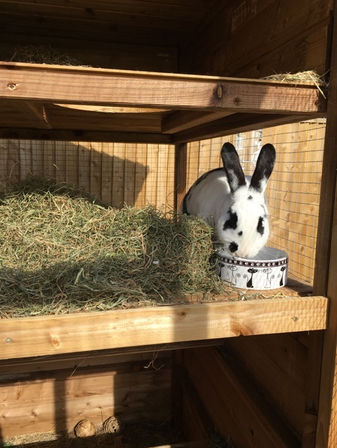 Rabbitopia Dunster House Customer Reviews