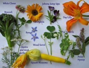 ediblelandscape-flowers