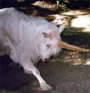 goat unicorn