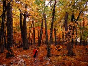 old-trees-fall-foliage-trail