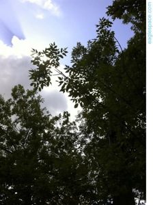 Trees clouds sky