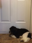 The puppy waits at the door...