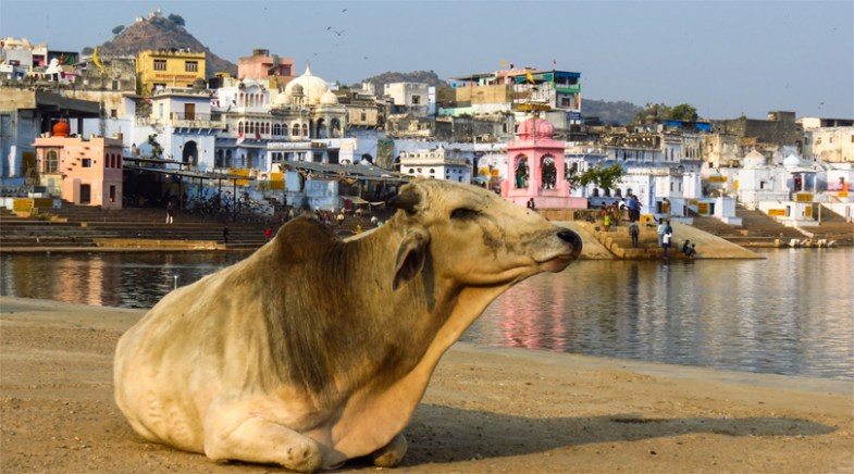 pushkar tour guide