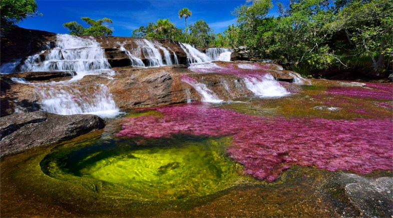 Cano Cristales in Columbia