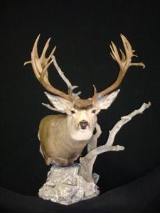 Front view of the new and improved Wyoming deer mount.