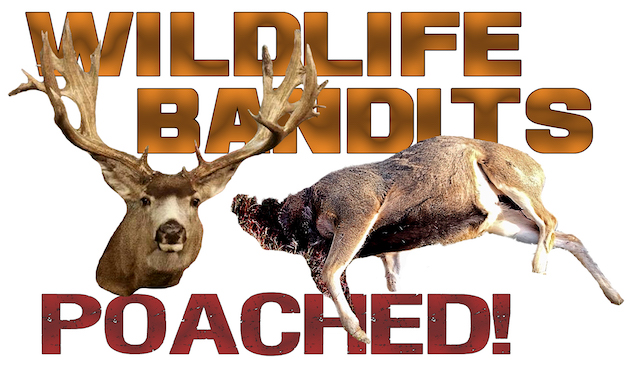 wildlife-bandits-poached2-630-copy