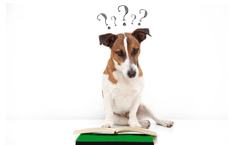 Why do my veterinary clients do less when I talk more?