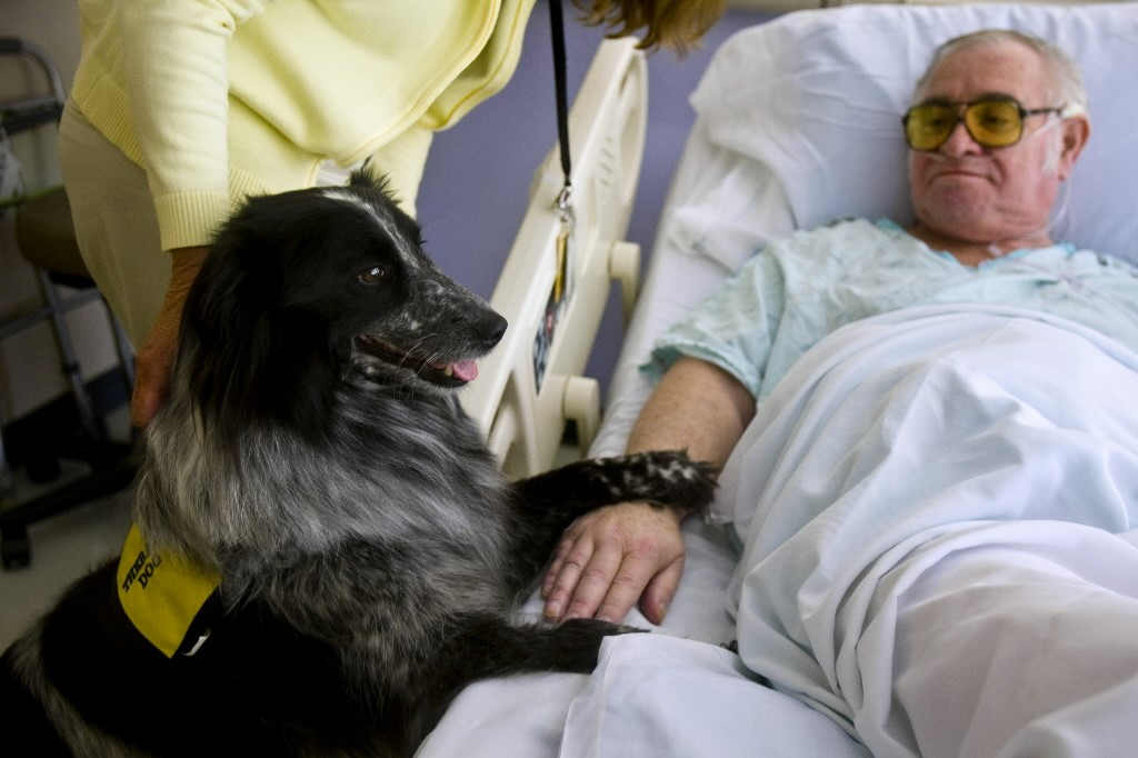 Image result for dogs visiting depressed patients