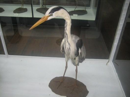 Visita de Estudo ao Museu de História Natural do Funchal (23/11/2017)