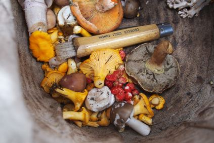 different mushrooms in a bowl, adaptogens