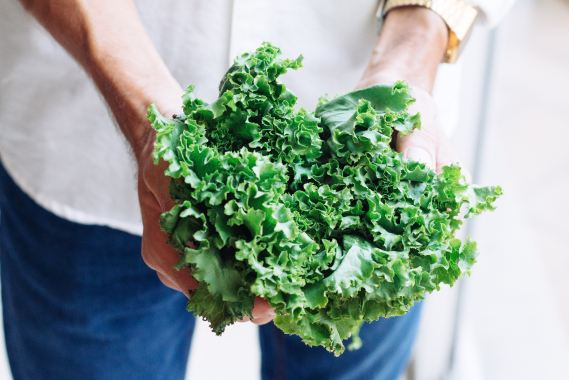 person holding kale