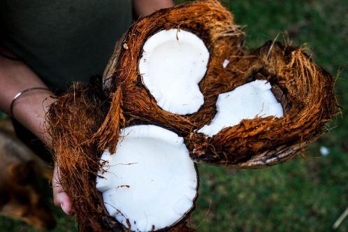 open coconuts in hands