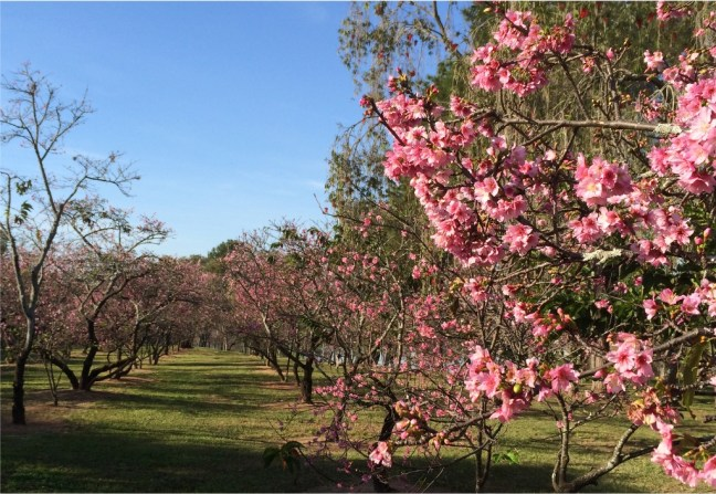Bosque das Cerejeiras - Ações sustentáveis em eventos