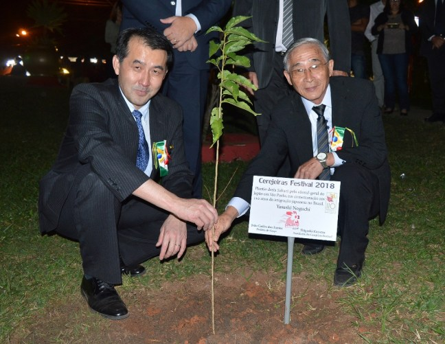 Consul-geral do Japão plantando uma muda de cerejeira