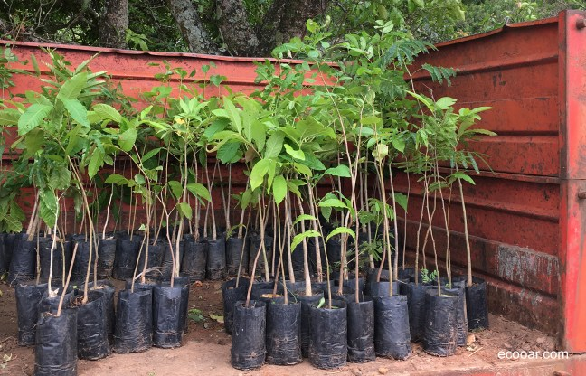 Foto mostra carreta de trator com mudas de árvores nativas