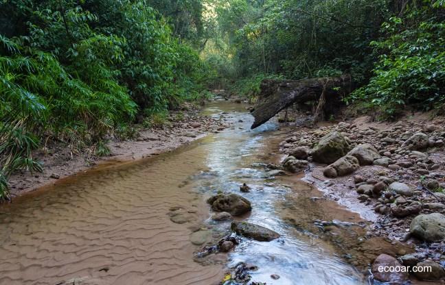 Foto mostra um riacho no meio de uma mata nativa