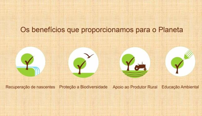 Imagem mostra 4 ícones contendo  árvores com informações sobre reflorestamento