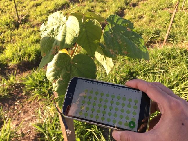 Imagem mostra árvore em área de reflorestamento e celular