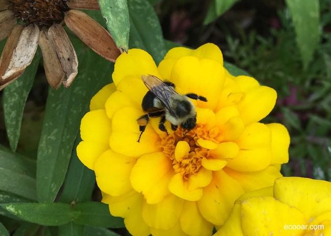 Abelhas coletando néctar de flores