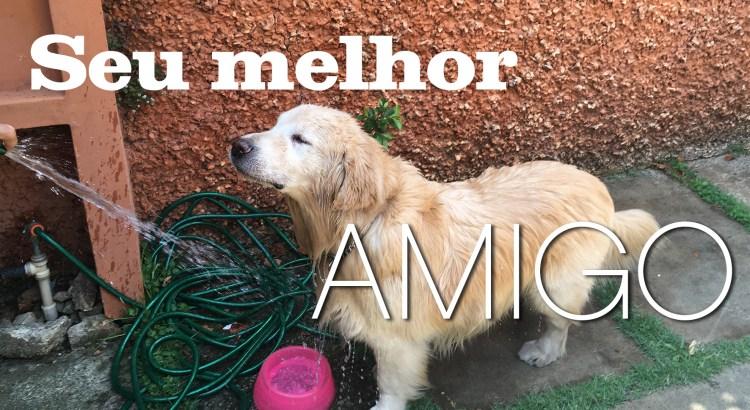 Foto mostra cão tomando banho
