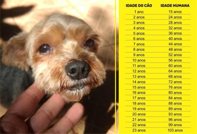 Imagem mostra tabela de idade comparativa entre cães e humanos