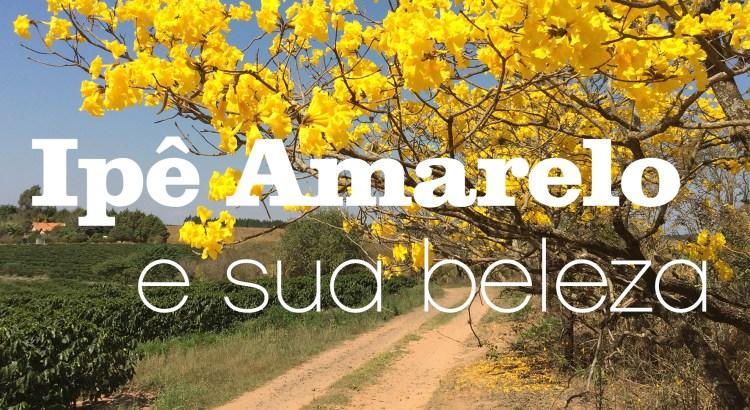 Foto mostra árvore de ipê amarelo próximo a uma estrada de terra