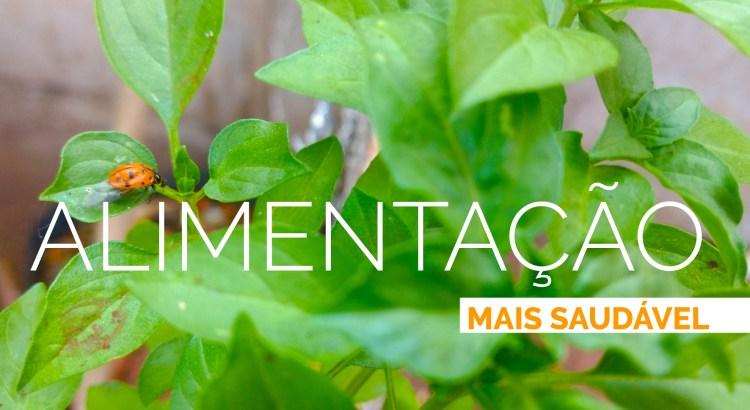 Foto mostra joaninha em folha de manjericão em uma horta